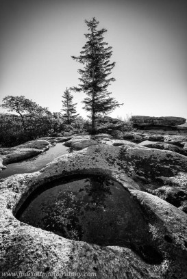 Lone Pine Dolly Sods West Virginia Monochrome blog